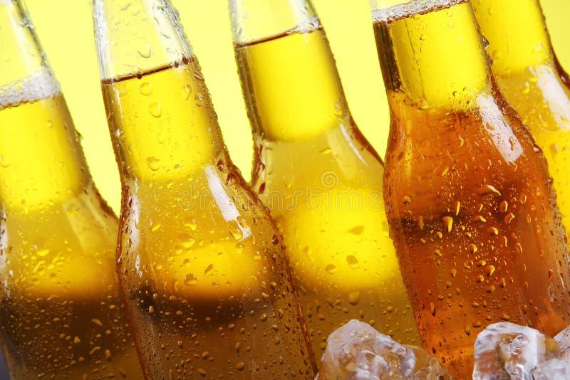 Bottiglie di birra fredda e fresca con ghiaccio immagini stock libere da diritti