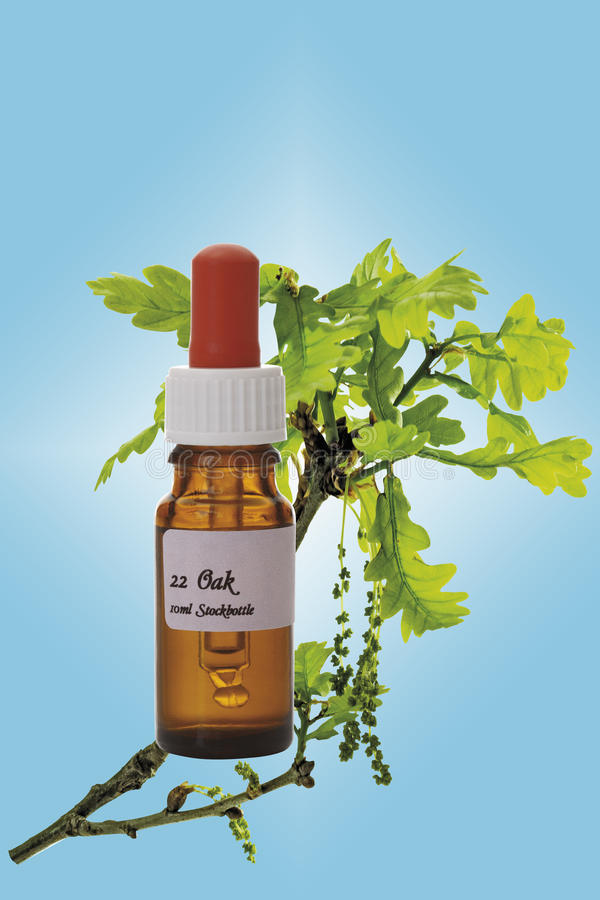 Bottle with Bach Flower Stock Remedy, Oak (Quercus), close-up stock photo