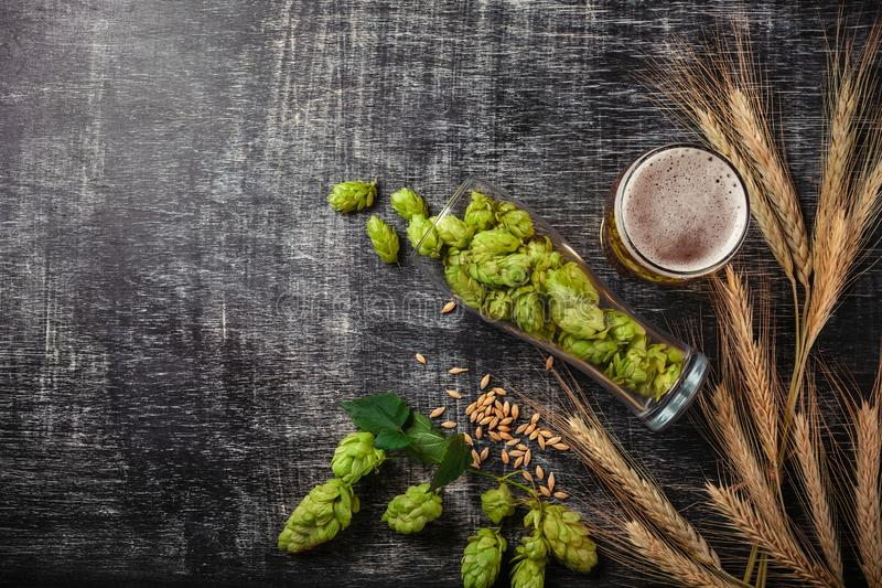 A bottle of beer with green hops, oat, wheat spikelets, opener and glasses with dark and light beer on black scratched chalk board stock photos
