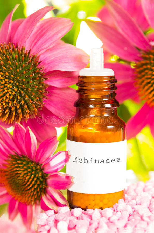 Bottle of Echinacea essential oil and flowers royalty free stock photography