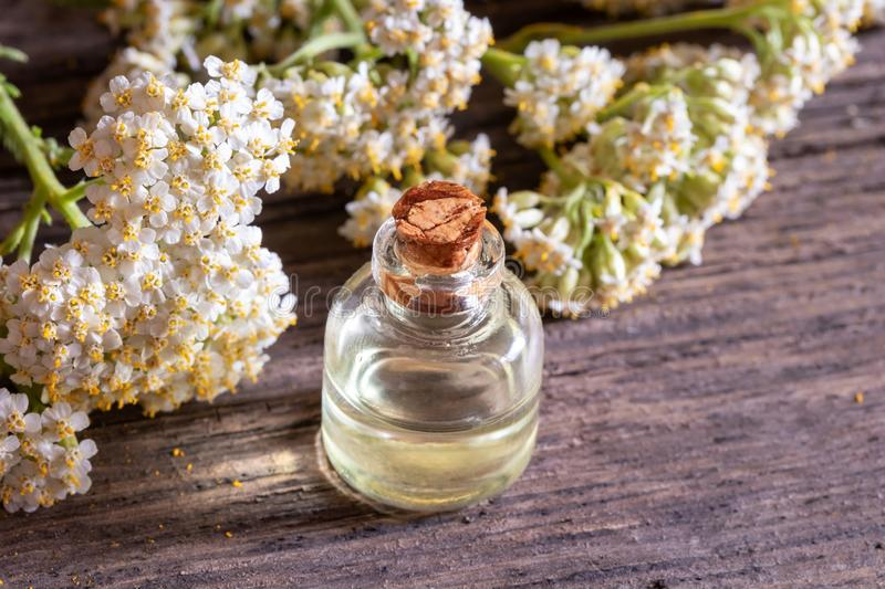 A bottle of yarrow essential oil with blooming yarrow stock images