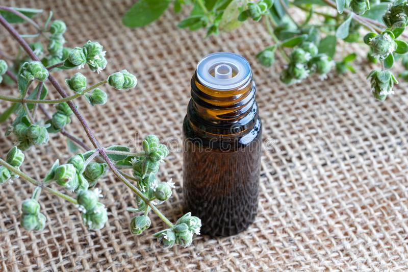 A bottle of marjoram essential oil with fresh blooming marjoram. A bottle of essential oil with fresh blooming marjoram twigs in the background royalty free stock photography