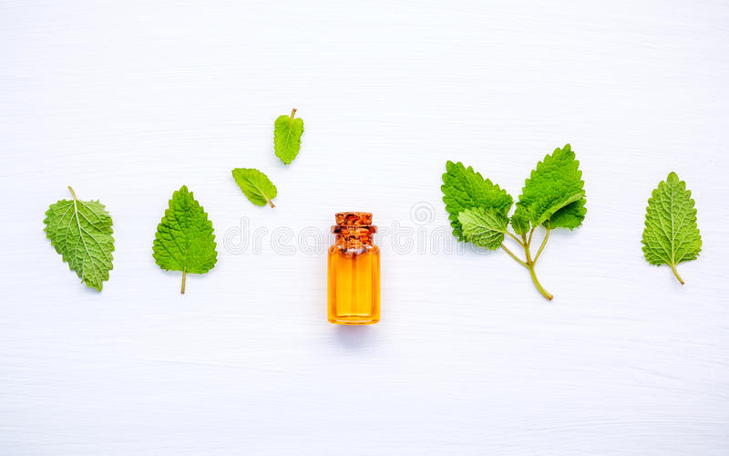 Bottle of essential oil with fresh lemon balm leaves setup with royalty free stock images