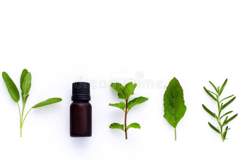 Bottle of essential oil with herb holy basil leaf, rosemary,oreg royalty free stock photos