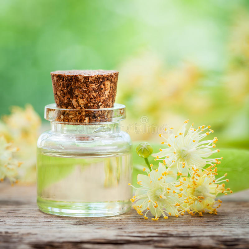 Bottle of essential oil and yellow lime flowers. royalty free stock photo