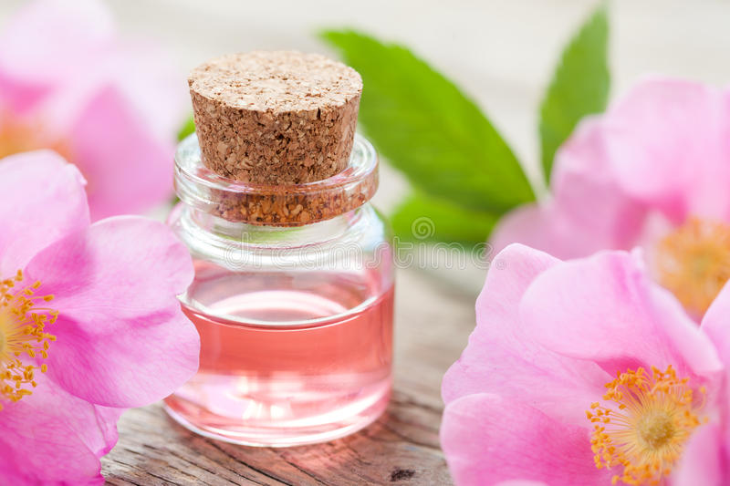 Bottle of essential roses oil and pink wild rose. Flowers royalty free stock photo