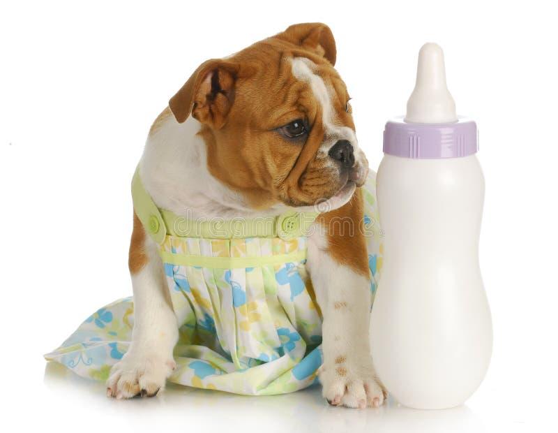 Bottle feeding puppy stock image