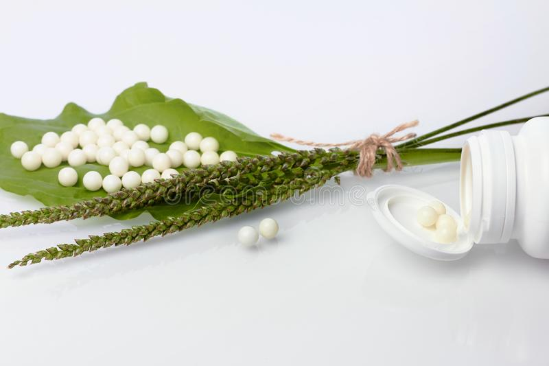 Bottle with homeopathic pills on green plant leaf. Homeopathy, naturopathy and alternative herbal medicine stock images