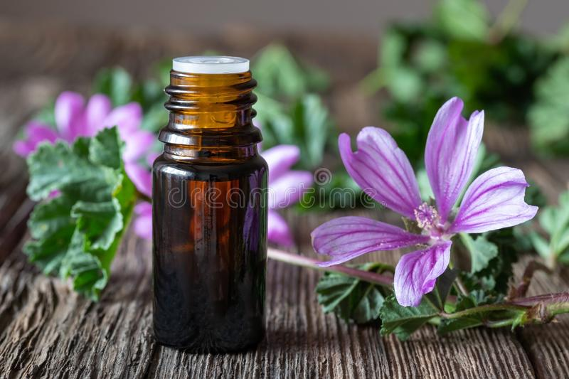 A bottle of common mallow essential oil with blooming malva sylvestris twigs. A bottle of mallow essential oil with fresh blooming malva sylvestris plant royalty free stock photos