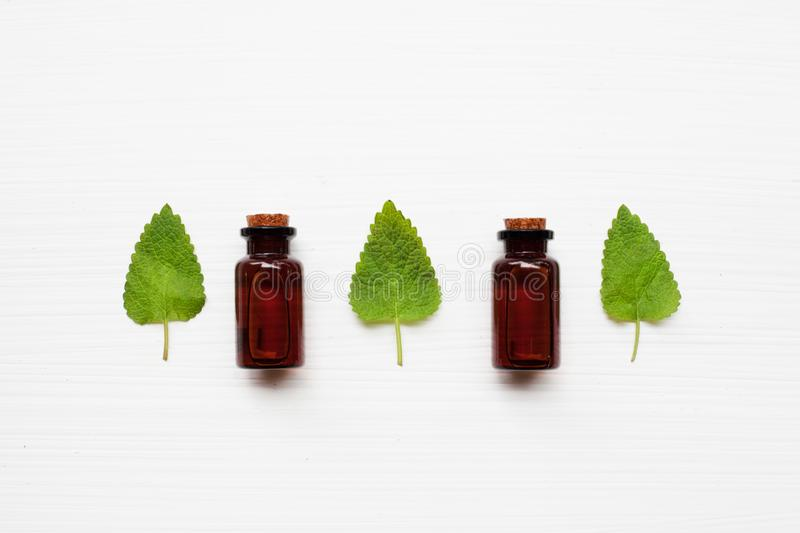 A bottle of melissa lemon balm essential oil with fresh leaves. royalty free stock image