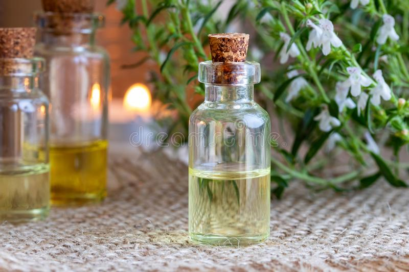 A bottle of mountain savory essential oil with fresh Satureja mo. A bottle of mountain savory essential oil with fresh blooming Satureja montana plant stock images