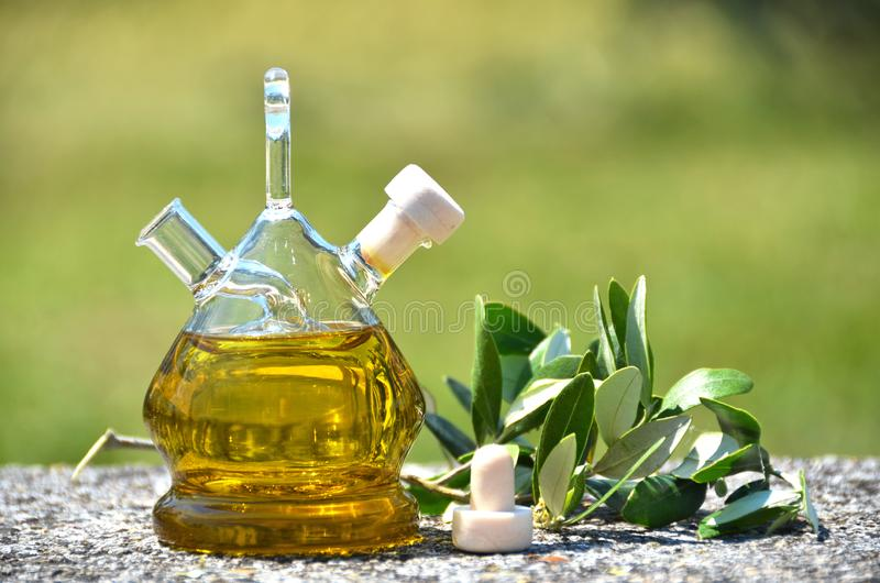 Bottle of olive oil in the olive grove royalty free stock images