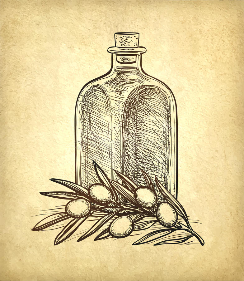 Bottle of olive oil and olive branch. Hand drawn vector illustration. Isolated on white background. Retro style vector illustration