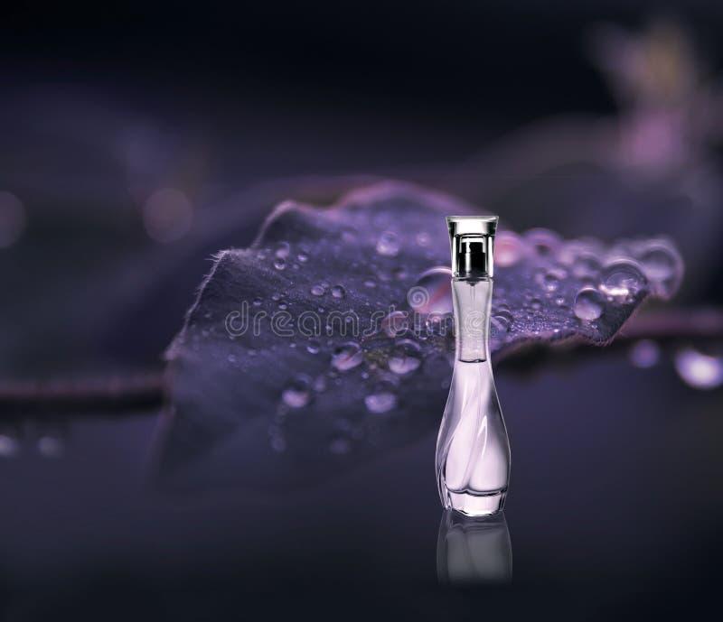 Bottle of perfume. On dark background royalty free stock photos