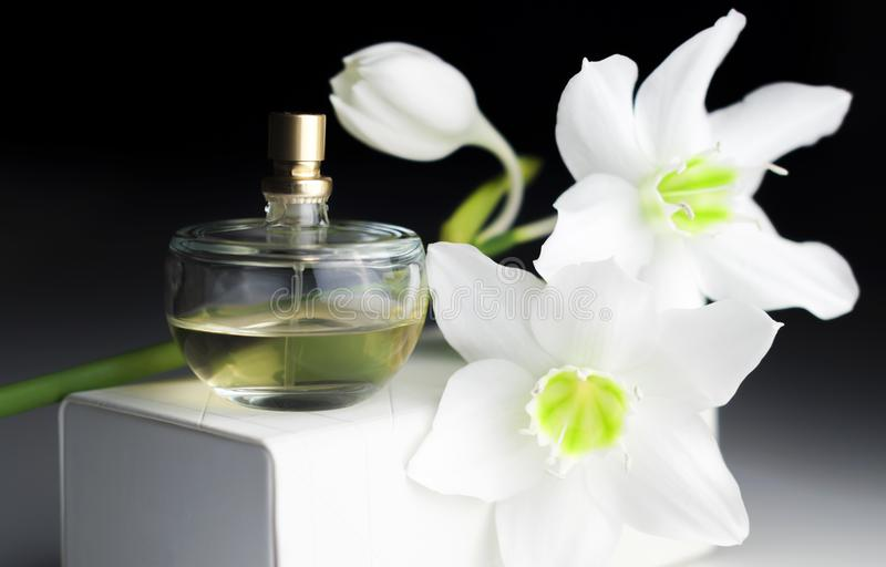 Bottle of perfume, white daffodil on a dark background stock image