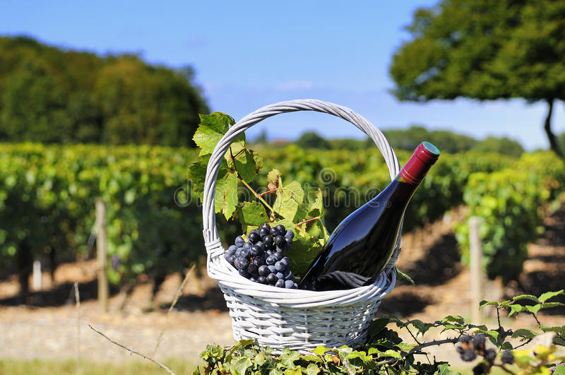 Bottle of red wine royalty free stock image