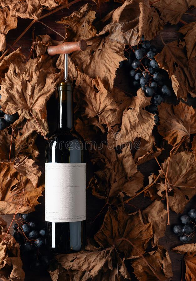 Bottle of red wine with corkscrew. On a table dried vine leaves and blue grapes. On a bottle empty old paper label, free space for your text royalty free stock photos