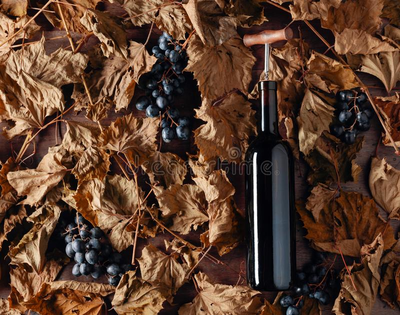 Bottle of red wine with corkscrew. On a table dried vine leaves and blue grapes. Top view royalty free stock photo
