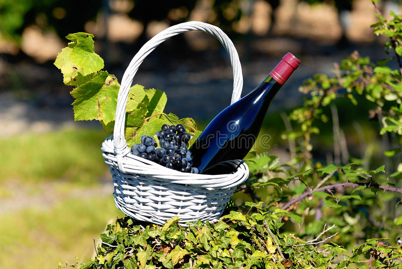 Bottle of red wine in countryside royalty free stock images
