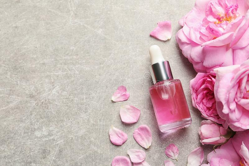 Bottle of rose essential oil, petals and flowers on grey table, flat lay royalty free stock image