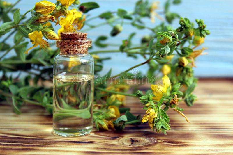 Bottle with St. John`s wort extract on the wooden table. Bottle with St. John`s wort , background, texture, flowers, flower, head, bud, wild, field, useful stock photo