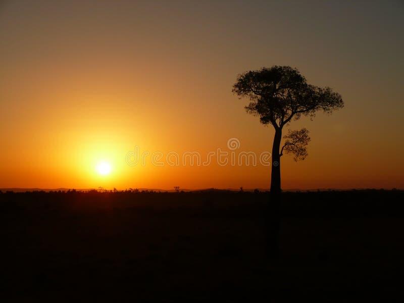 Bottle tree in Australia royalty free stock images