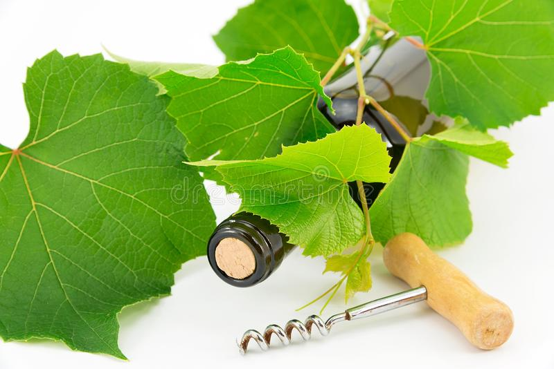 Download Bottle of wine stock photo. Image of bacchus, branch - 25876546