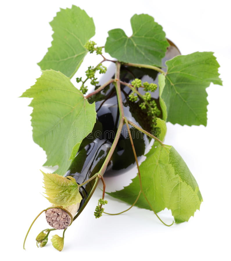 Bottle Of Wine Teined With Vine Stock Photography