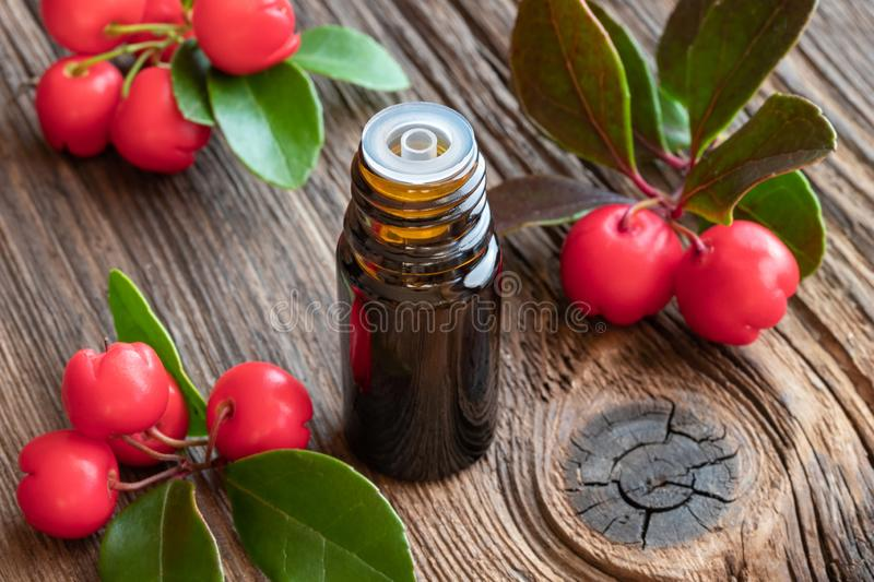 A bottle of wintergreen essential oil with fresh wintergreen plant. A bottle of essential oil with fresh wintergreen twigs stock photos