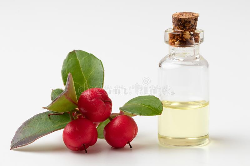 A bottle of wintergreen essential oil with wintergreen twigs on. A bottle of essential oil with wintergreen leaves and berries on a white background royalty free stock images