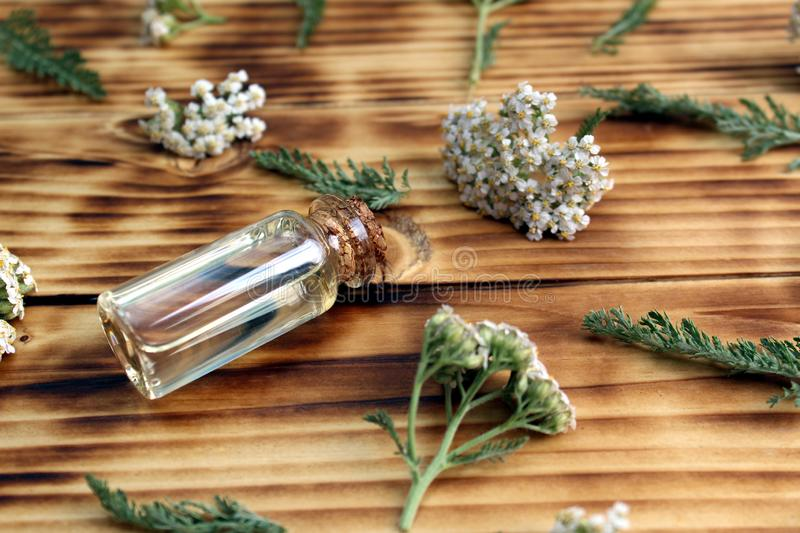 A bottle of yarrow essential oil with fresh yarrow flowers on a wooden background. Background, texture, flowers, flower, head, bud, wild, field, useful royalty free stock photography