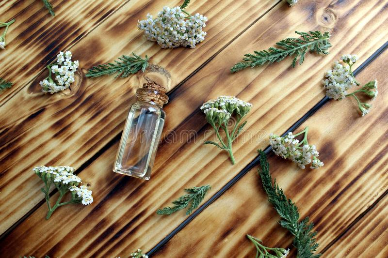 A bottle of yarrow essential oil with fresh yarrow flowers on a wooden background. Background, texture, flowers, flower, head, bud, wild, field, useful stock photos