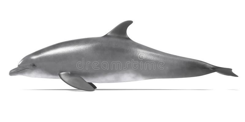 Bottlenose delfin royalty ilustracja