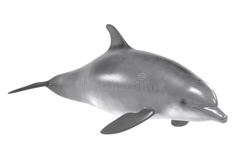 Bottlenose delfin ilustracji