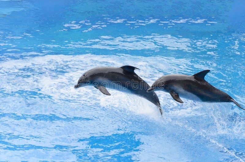 Bottlenose delfinu doskakiwanie od błękitne wody fotografia royalty free