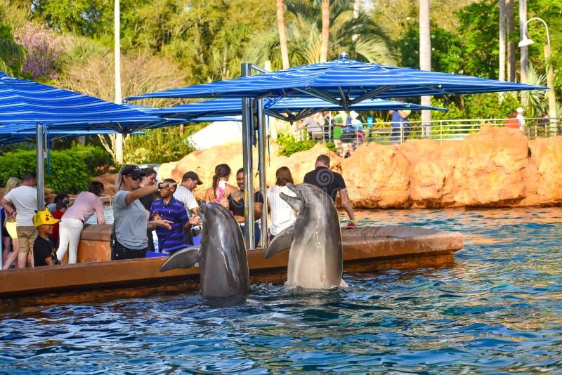Bottlenosedolfijnen die in Seaworld op Internationaal Aandrijvingsgebied 2 springen stock afbeelding