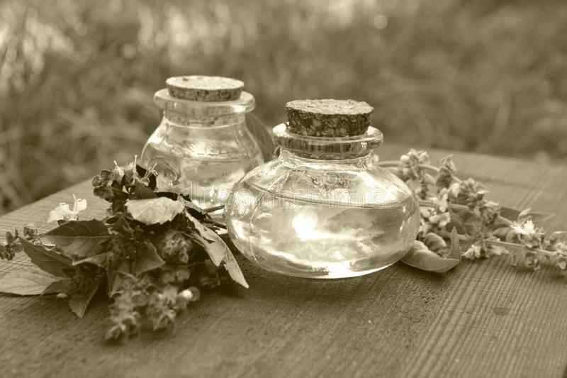 Two bottles of basil essential oil wiht fresh basil leaves, monochrome photo in retro style. Bottles of basil essential oil wiht fresh basil leaves, monochrome stock image