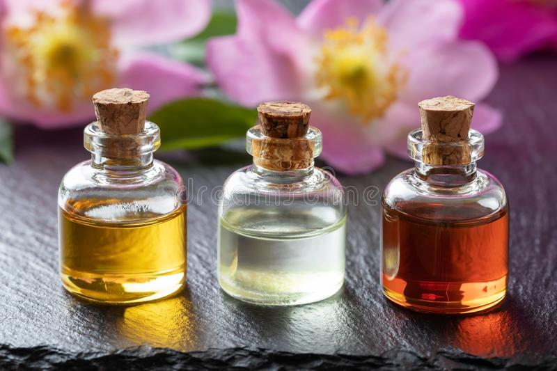 Bottles of essential oil with fresh dog rose flowers royalty free stock images