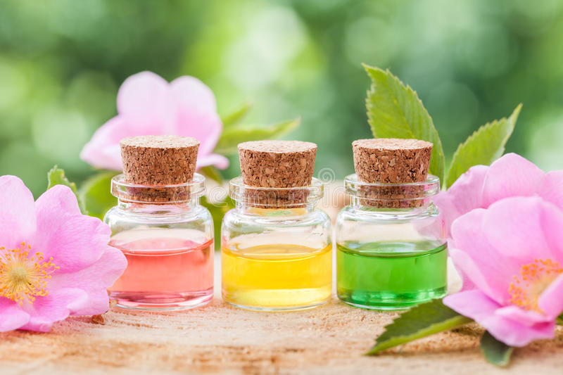 Bottles of essential oil and pink wild rose flowers. Closeup stock photos