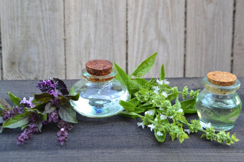 Bottles of essential oil with violet and green basil leafs and flowers on black wooden table royalty free stock photography