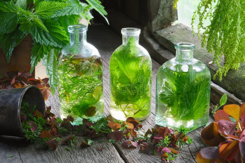 Bottles and vials of tincture or infusion of healing herbs, nettle and medicinal herbs on wooden table in a retro village house. stock images