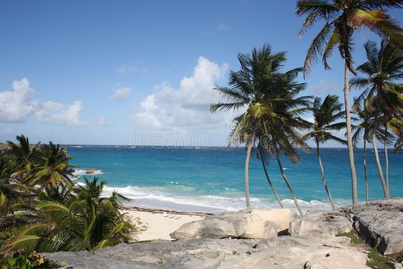 Bottom Bay Barbados. Palm trees at Bottom bay Barbados stock photography