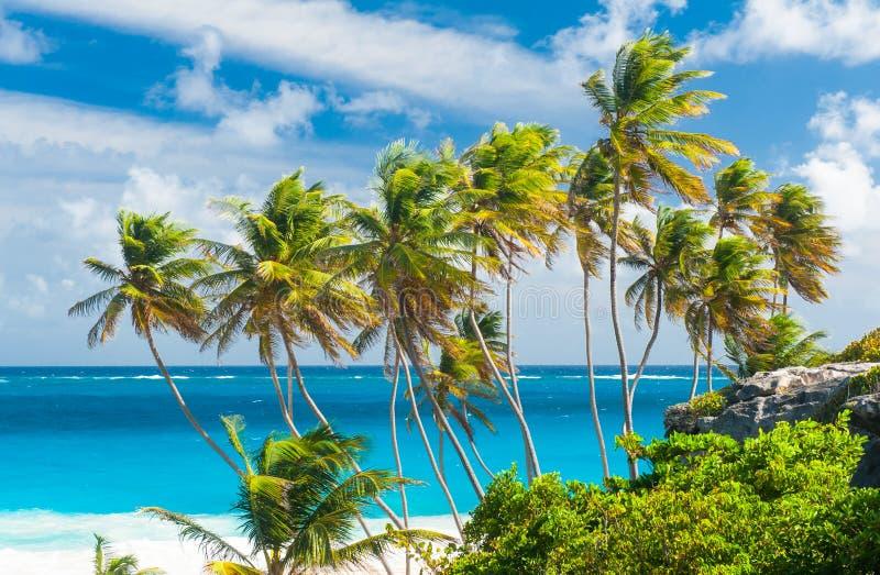 Bottom Bay. Idyllic, coconut.
