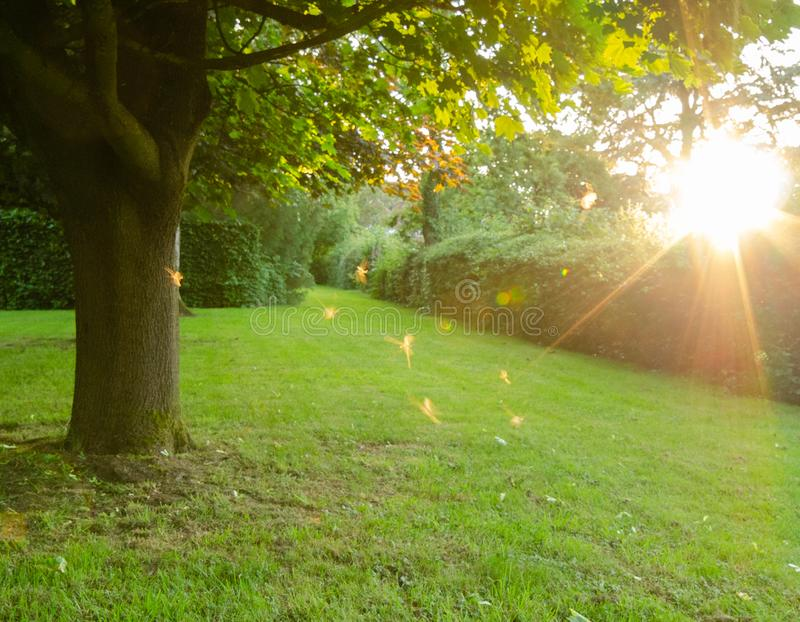 Fairies dancing in the sun. At the bottom of the garden, as the afternoon sun shone brightly through the trees, midges small flies danced around in the warm air stock images