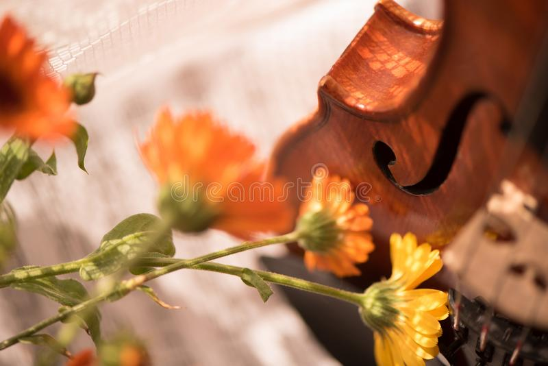 Bottom half of a violin with sheet music and flowers the front of the fiddle on windows background. Horizontal image with Violin and flowers on the window royalty free stock photos