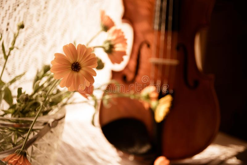 Bottom half of a violin with sheet music and flowers the front of the fiddle on windows background. Horizontal image with Violin and flowers on the window royalty free stock photo