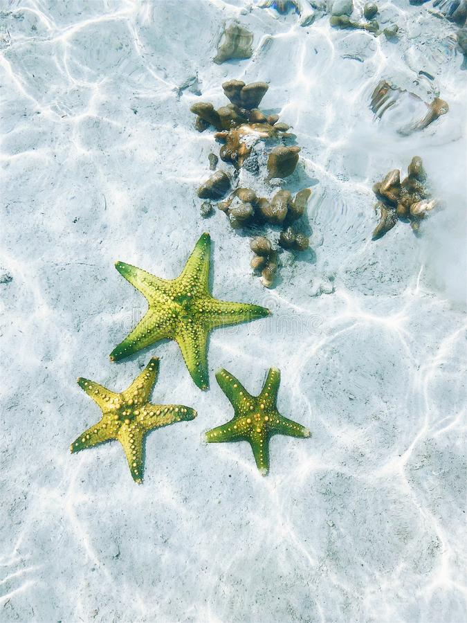 Starfish at the bottom of the ocean under the rays of the sun stock photography