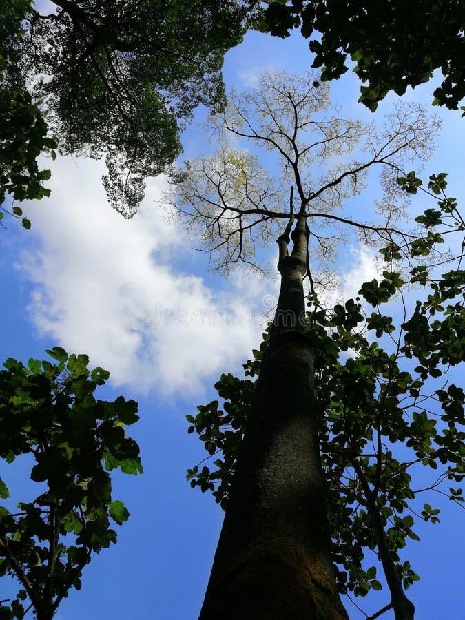 Bottom up view of forest trees at Taman Wetland Putrajaya Malaysia stock photos