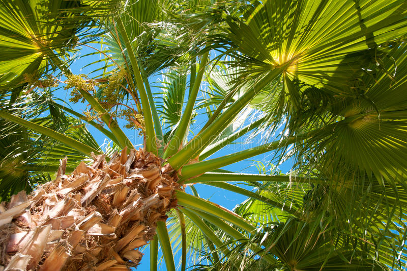 Bottom-upansicht einer schönen Palme stockfotografie