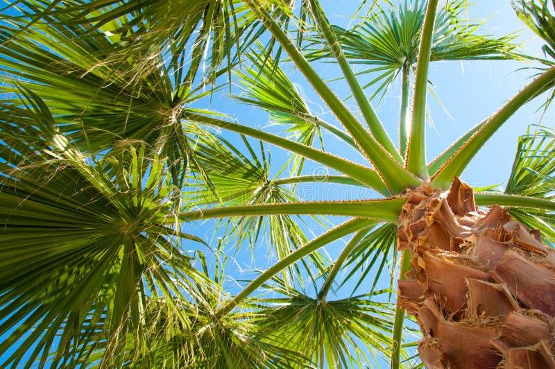 Bottom-upansicht einer schönen Palme stockbilder